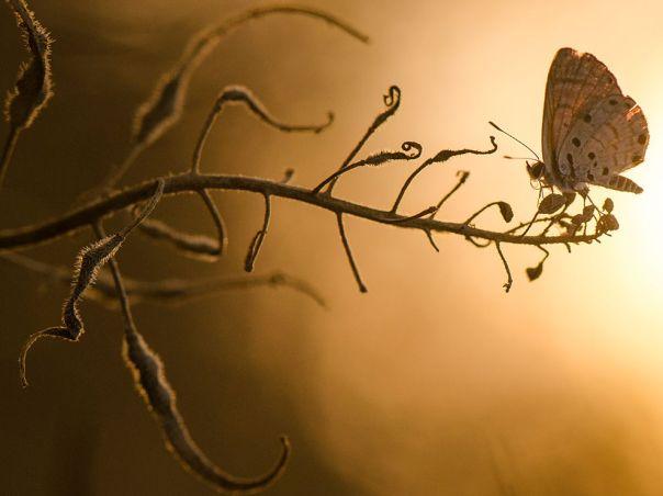 butterfly-branch-macro_60633_990x742
